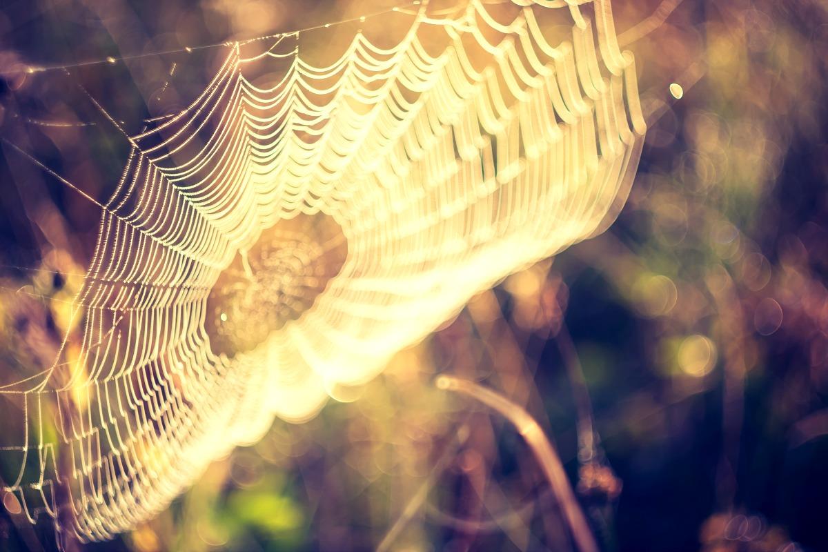 Knight's Spiderweb Farm in Williamstown, Vermont