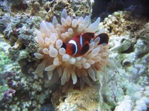 William Bailey Travel Reviews the Portland Aquarium